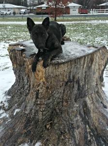sky-on-a-stump