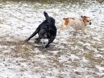Good play often involves changes in who chases whom. First Skywalker chased the other dog.
